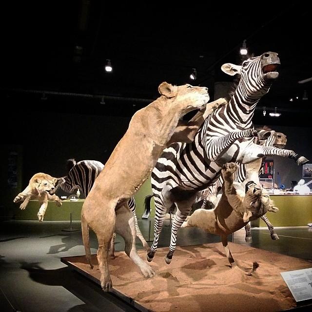 Supervivencia #naturaleza #museo