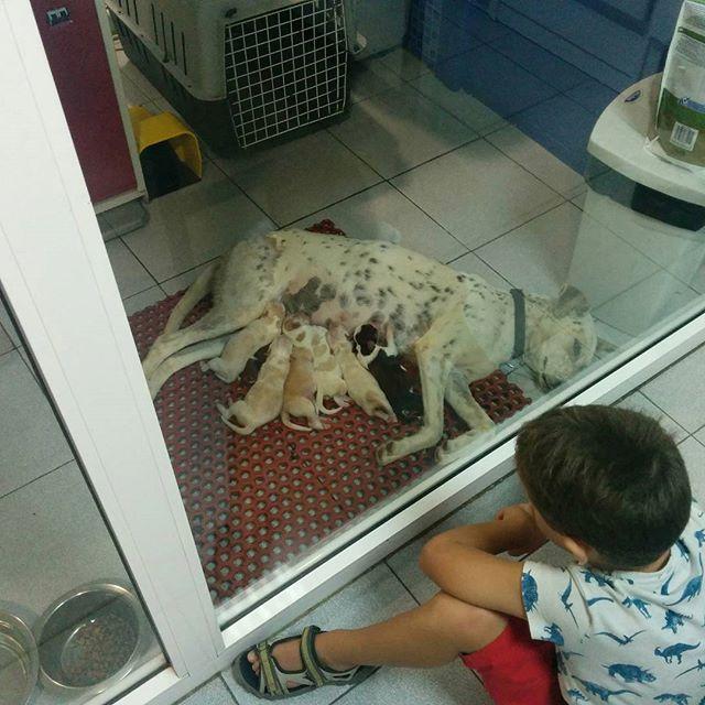 Momento especial  #cachorros
