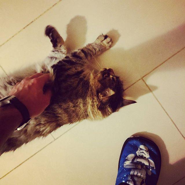 """Momento """"mimos"""" de todos los días antes de ir a trabajar  #gatos"""