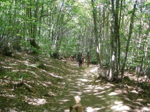 Subida por el bosque hacia el mirador