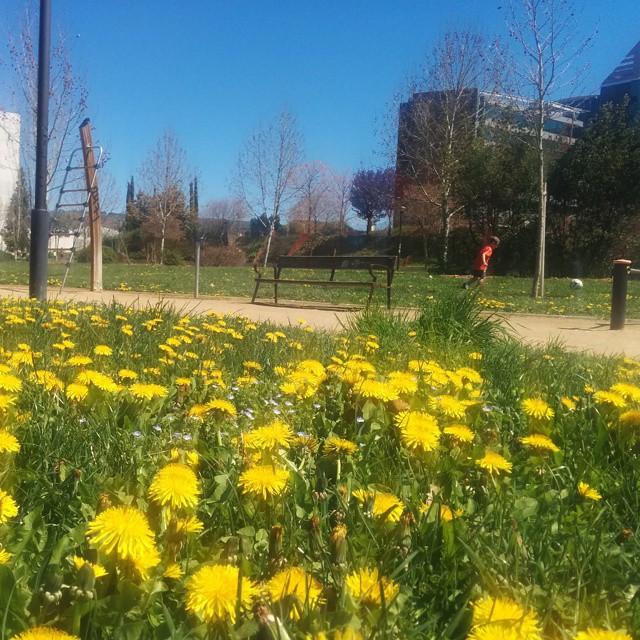 Mañana primaveral en #Granada (25°C y subiendo)