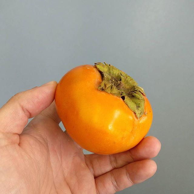 Un nuevo sabor sexitano: la variedad Sharoni del caqui